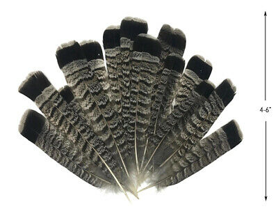 10 Pieces - Gray and Black Ruffed Grouse Tail Feathers Fly Tying Craft Supplier