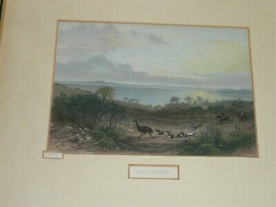 ANTIQUE HAND COLOURED ENGRAVING TITLED LAKE ALBERT THE EMU HUNT BY S.PROUT c1874