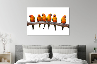 Amazing Parrots Colorful Painting Print Home Decor Wall Art choose your size
