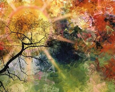 Amazing Abstract Colorful Tree Design Print Home Decor Wall Art choose your size