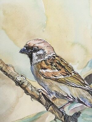 Tree Sparrow,On Branch.Original Painting.Bird-Watcher Gift.Delicate Watercolour