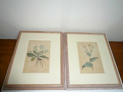 ANTIQUE EARLY ORIGINAL ENGRAVINGS HAND COLOURED BY WILLIAM CURTIS LONDON c1793