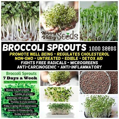 BROCCOLI Sprouts 1000+ Seeds Spout Sprouting *CANCER PREVENTION* Brocoli NON-GMO