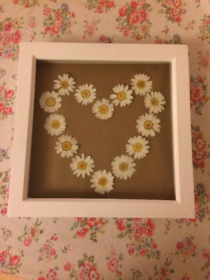 Framed Heart Design of Large Dried Pressed Daisies