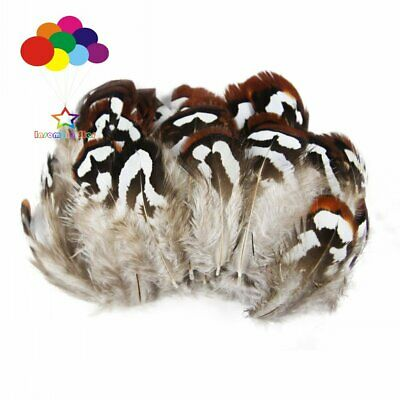 Premium Pheasant 4-10cm/2-4inch craft unique colorful patterned real feathers