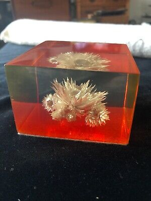 Vintage Mid Century Lucite Encapsulated Flower Paperweight