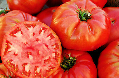 Tomato Seeds, Mortgage Lifter, Non-Gmo Heirloom Tomatoes, Huge & Delicious 50ct