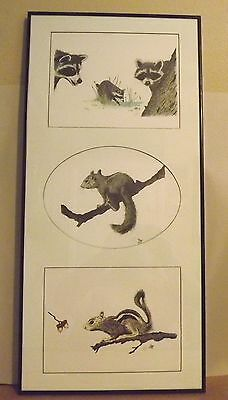 3 part Pencil Signed Dick Ayre Lithographs Raccoons & Squirrels Framed w/glass