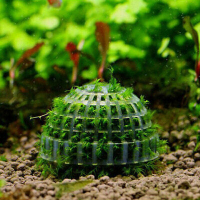 Marimo Moss Ball Filter Live Aquarium Aquatic Plants Decor Fish Shrimp Ta OMV