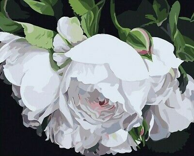 Paint By Numbers DIY Kit White Flower 40CMx50CM Canvas