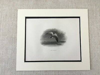 Bird Print The Heron Rare Birds Old Antique Original Engraving