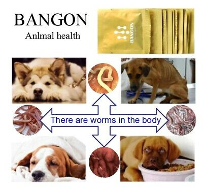 BANGON Dog Cat Pet Animal Wormer Worming Tablets Dewormer 4-40 Tabs