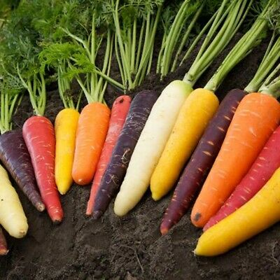 100 Pcs Rainbow Carrots Mix Seeds Healthy Fresh Vegetables Seeds Garden Decor