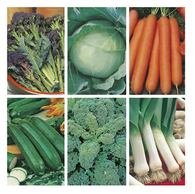 6 pack Vegetable Seeds all year round broccoli cabbage carrot kale leek courgett