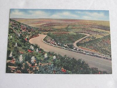 G254 Postcard Scenic Drive Through Carlsbad Cavern National Park NM New Mexico