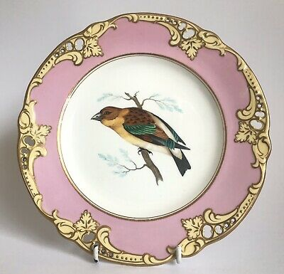 A Good Antique Mid 19th Century English Porcelain Plate C1850 Possibly Davenport