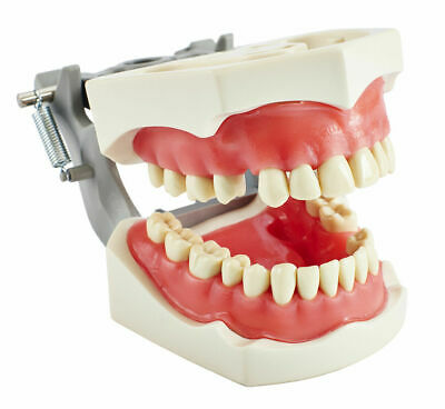Columbia MODEL 860 ARTICULATED SOFT GINGIVA MODEL W/ UNIVERSAL ADAPTER CSB
