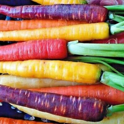 100X Mixed Rainbow Carrot Seeds NON-GMO Viable Organic Vegetable Seeds