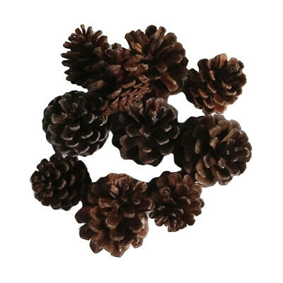 10 Natural Dried Flowers Pine Cones DIY Accent Christmas Decoration Ornament