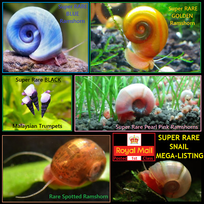 SUPER RARE Tropical Aquarium Snails Ramshorn Giant Snail Assassin Nerite Spixi