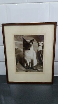 Antique Framed Siamese Cat photograph