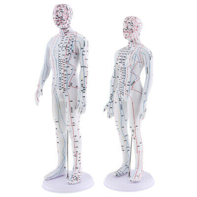 2 Pieces Human Acupuncture Female and Male Model for Clinics, Practitioners