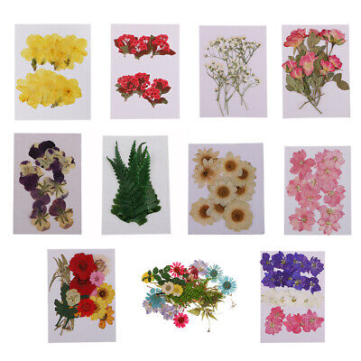 Multi Pressed Real Flower Dried Flowers for Scrapbooking Card Making Phone Decor