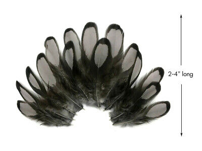 1 Dozen - Heron Gray Whiting Farms Laced Hen Saddle Feathers Fly Tying Craft