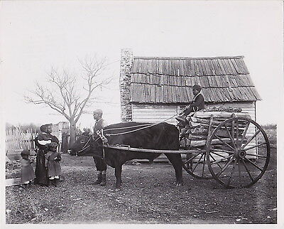 FRANCES BENJAMIN JOHNSON African-American Family with Ox Cart 1890s press photo