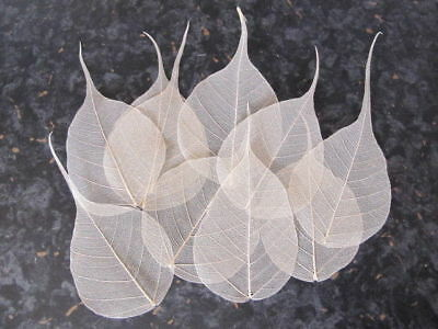 2 x 100 Natural skeleton 2-3 inches Small Leaves Craft Topper SALE CLEARANCE *