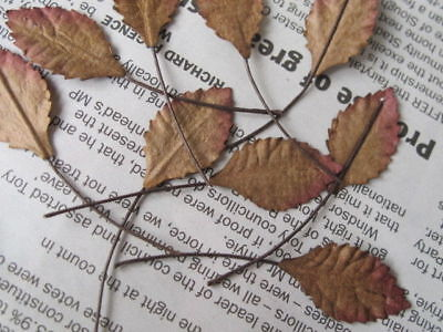 20 Rose Leaves Autumn Brown 12mm width Wire Stem Mulberry Paper Craft R2B