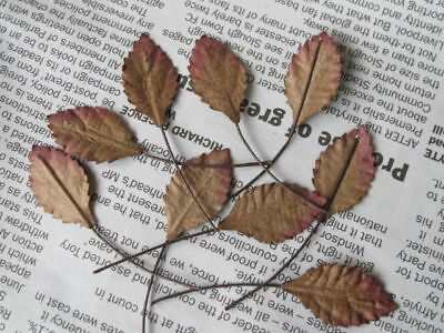 50 Rose Leaves Autumn Brown 12mm width Wire Stem Mulberry Paper Craft R2B