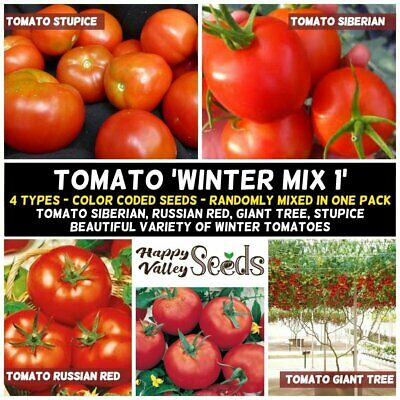 TOMATO Winter Mix #1 15 Seeds FOUR TYPES Tomatoes MIXED HEIRLOOM Seeds Vegetable