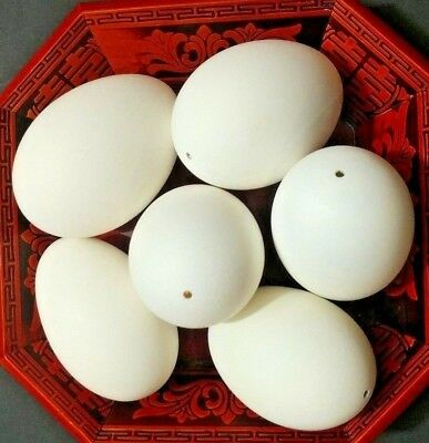 """6 Blown Empty Goose Eggs Embden &Chinese Mixed Size Circumference 8 1/4""""-8 1/2"""""""