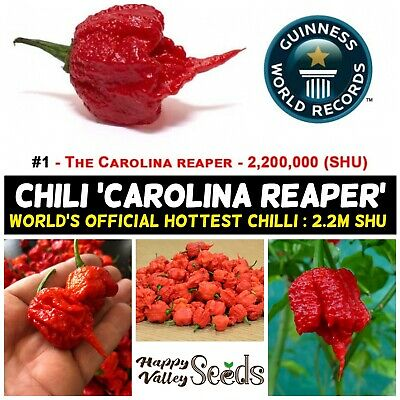 Chilli CAROLINA REAPER 10 Chili Seeds Pepper 100% PURE ISOLATED STRAIN HOT SPICY