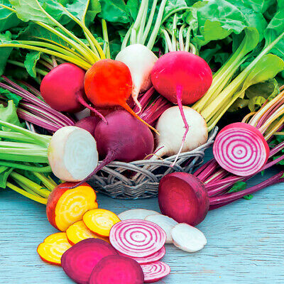 BEETROOT Heirloom Mix 60 Seeds AUTUMN WINTER SUMMER SPRING EASY Vegetable Garden