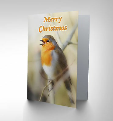 Christmas Xmas Robin Red Breast New Art Greetings Gift Card Cp1940