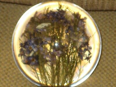 Hafod Grange PAPERWEIGHT FORGET ME NOT in Resin 2003 England