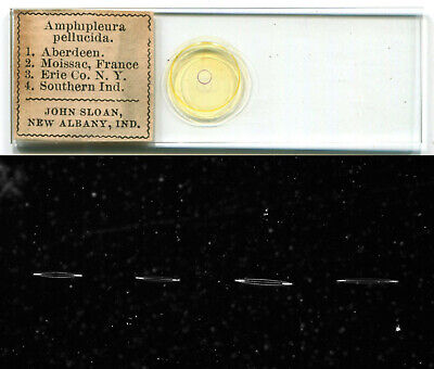 Arranged Amphipleura Diatoms by J. Sloan, Microscope Slide, Test Objects