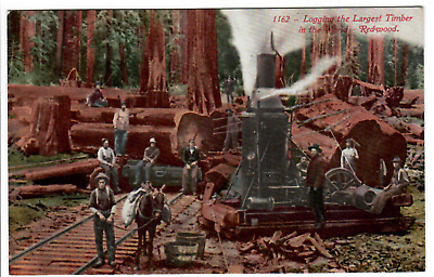 1907-1915 Mitchell postcard 'Logging The Largest Timber In The World - Redwood'