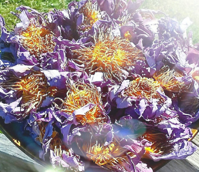 Egyptian Blue Lotus Dried Flower - Nymphaea caerulea Natural Organic Wicca Herb