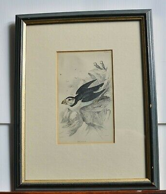 "Framed Engraving Of ""The Puffin"""