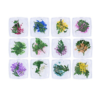 12 Boxes Nail Dried Flower Beautiful 3D Nail Art Sticker Accessories for Women