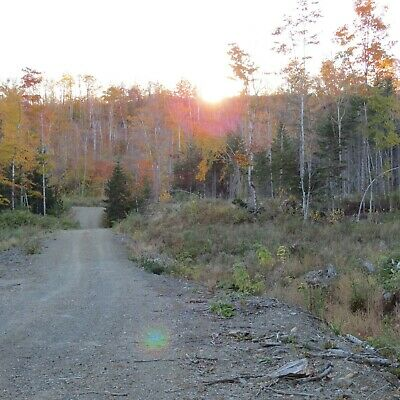 ***Own 39.7 Acres +/- Of Land In Northern Maine Next To The Canadian Border***