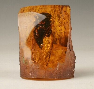 Precious Chinese Artificial Amber Cicada Specimen Old Collection Decoration