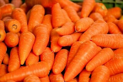 Chantenay Carrot 250 Seeds Quality Vegetable Sweet Crunchy Gourmet Fast Grower