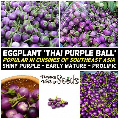 Eggplant THAI PURPLE BALL 15 Seeds PURPLE vegetable garden SUMMER aubergine EASY