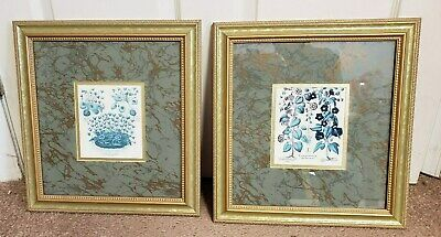 Pair Of Besler Botanical Prints Framed & Matted Very Nice From An Estate