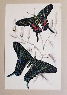 c1840 Antique Victorian Watercolor Painting Drawing Butterflies Insects English