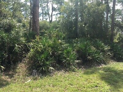 OVERSIZED HALF ACRE FLORIDA LOT LAND Lehigh Cape Myers Naples Gorda Charlotte FL